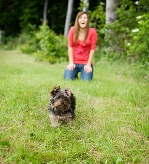 牧草地のヨークシャーテリアの子犬