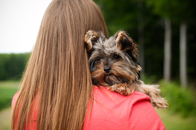 Yorkshire terrier puppy on woman's arms