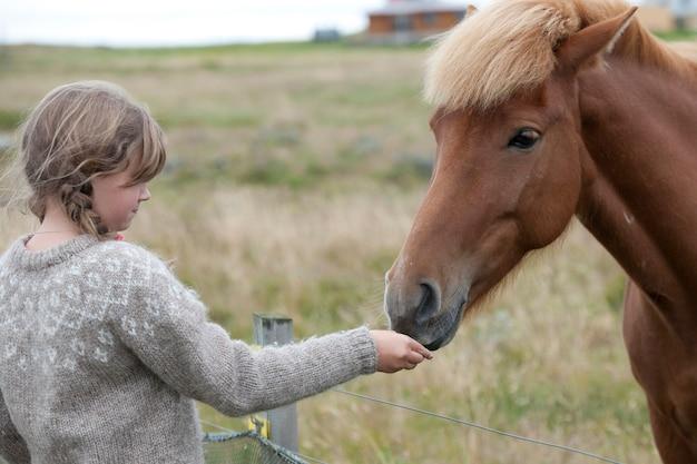 Yound девушка рука кормления каштана исландской лошади над проволочной оградой