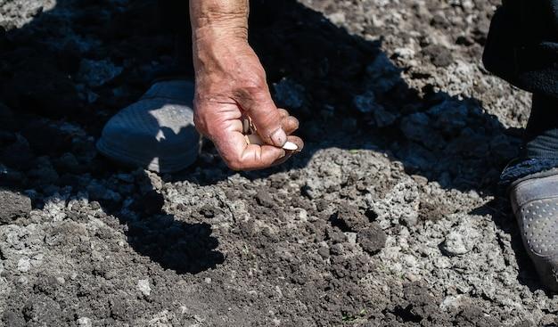 Молодая взрослая женщина рука сажает семена тыквы в свежей темной почве. выборочный фокус