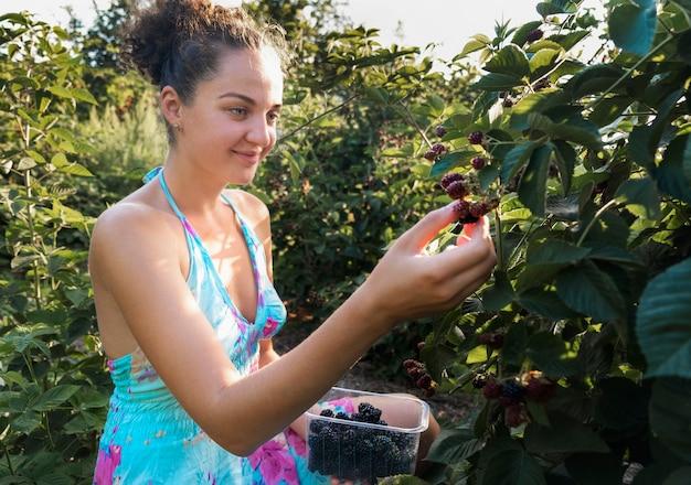 若い大人の女性は、緑の葉の背景に熟したブラックベリーの果実を選びます。園芸。収穫。