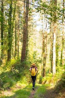 A young adventurer in a hat with a yellow backpack in the forest pines