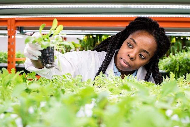 温室で新しい種類の植物の研究をしながら棚から緑の苗を取る若いアフリカの女性生物学者