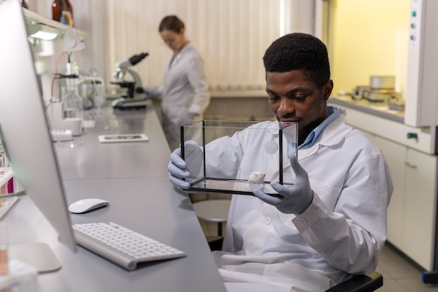 Young african man in workwear looking at white mouse in glass box while working in lab