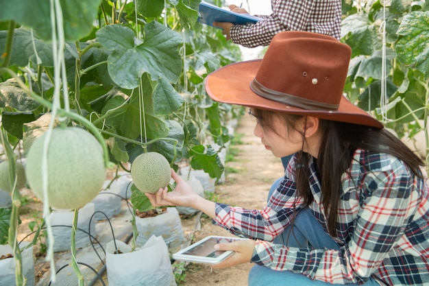 Young agricultural engineer studying new sort of melon growing in hothouse
