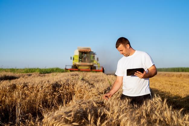 Молодой человек агронома стоя в золотом пшеничном поле с таблеткой и проверяя качество пока комбайн работая позади.