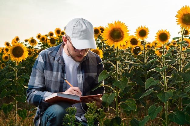 ひまわり畑で働く若い農学者
