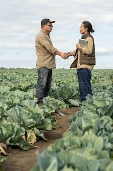 성장하는 양배추 사이에서 악수하는 젊고 성숙한 농부