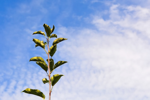 Young apple seedlings on a background of blue sky with clouds. place under the inscription