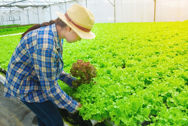 Young asian farmer pretty girl working in vegetables hydroponic farm.she is looking and using hands check the quality of green lettuce.