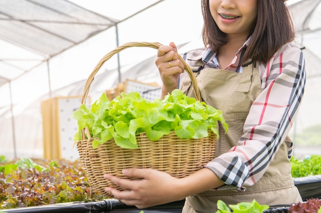Young asian hydroponics organic farmer collecting vegetables salad into basket
