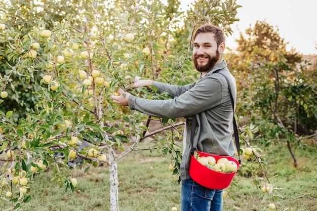 若い魅力的な農家の男性労働者は、秋の収穫時に村の果樹園でリンゴを収穫します。幸せな男は庭で働き、バケツで折りたたまれた熟したリンゴを収穫します。