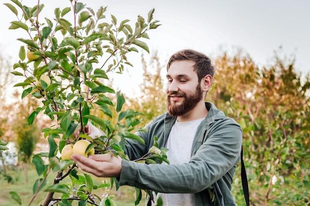 若い魅力的な農家の男性労働者は、秋の収穫時に村の果樹園でリンゴを収穫します。幸せな男は庭で働き、日没時に折りたたまれた熟したリンゴの肖像画を収穫します。