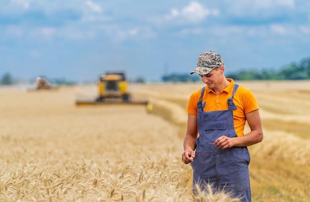 麦畑に立っている若い魅力的な農家。バックグラウンドで小麦畑で働くコンバイン。