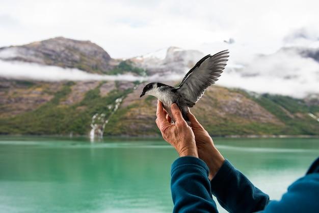 幼鳥はチリのフィヨルドで飛ぶことを望んでいます