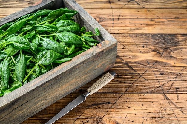 Молодые листья шпината младенца в деревянной коробке фермы. естественный деревянный фон. вид сверху. скопируйте пространство.