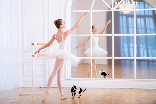 Young ballerina standing on pointe in a ballet tutu in beautiful white hall i with her back to viewer next to a little chihuahua dog.