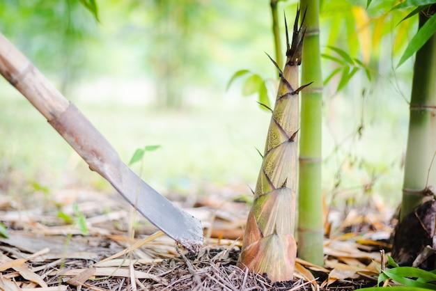 農業タケノコの若いタケノコ。