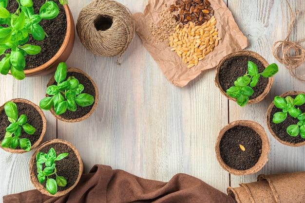 Молодой базилик в торфяных горшках и семена разных видов на светлом столе. вид сверху с копией пространства.