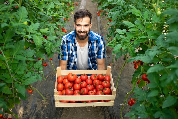 Молодой бородатый фермер держит свежеубранные помидоры в саду