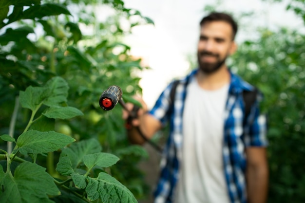 Young bearded farmer worker spraying plants with pesticides to protect against disease