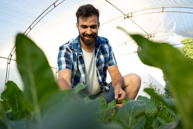 Giovane barbuto lavoratore agricoltore toccando le foglie dei raccolti e controllando la qualità delle piante