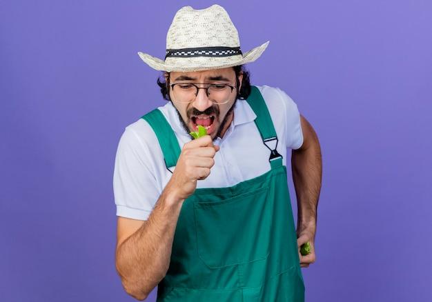 파란색 벽 위에 서있는 녹색 핫 칠리 고추의 반쪽을 들고 점프 슈트와 모자를 쓰고 젊은 수염 정원사 남자