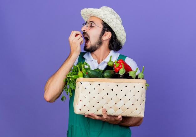 Giovane giardiniere barbuto uomo che indossa tuta e cappello tenendo la cassa piena di verdure mordere il pomodoro in piedi sopra la parete blu