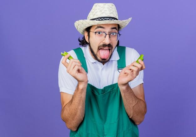 Giovane giardiniere barbuto uomo che indossa tuta e cappello tenendo le metà del peperoncino verde che sporge la lingua sentendosi come se brucia nella sua bocca in piedi sopra il muro blu