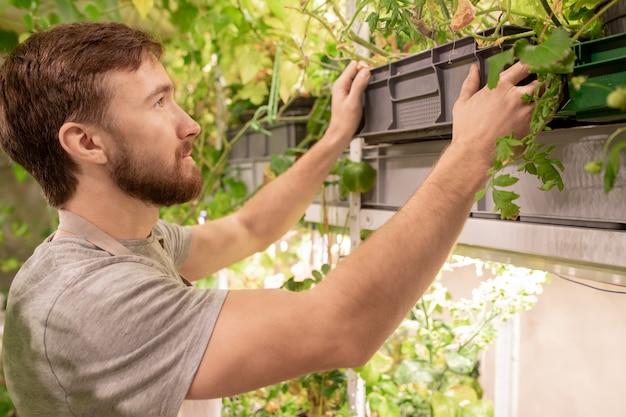 温室で作業しながら棚に苗のコンテナを置く若いひげを生やした男