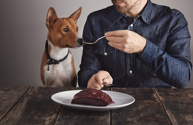 Giovane uomo barbuto condivide un piccolo pezzo di grande bistecca di carne di balena di lusso crudo sulla forcella vintage con il suo bellissimo cane africano. il cane odora di carne.