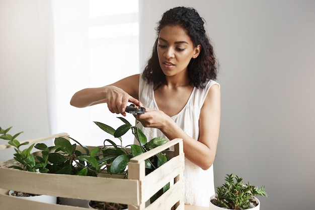 Young beautiful african female botanist cutting plant stems at workplace. copy space.