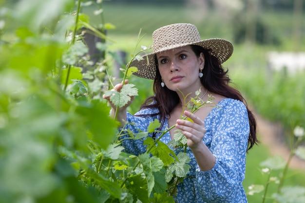 ドレスと帽子をかぶった若い美しい女性農夫は、つるの近くに立って、葉に触れてチェックします