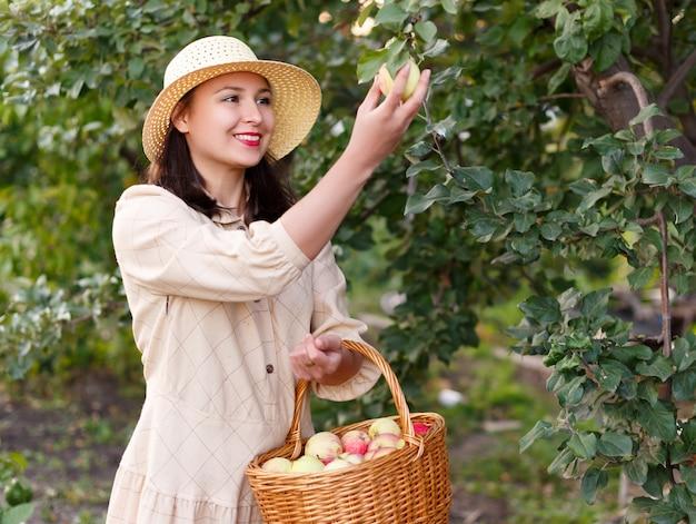 Молодая красивая женщина с большой корзиной красных органических яблок. сбор и сбор фруктов на веганской ферме в осенний день на открытом воздухе.