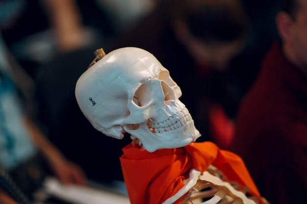 Young beauty studying  skeleton student. skull session.