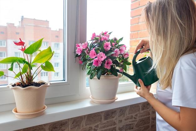 Молодая блондинка поливает розовые комнатные растения в цветочных горшках лейкой на подоконнике