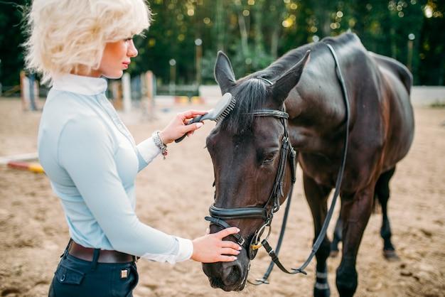 Молодая блондинка берет уход за коричневой лошадью. конный спорт, привлекательная дама и красивый жеребец