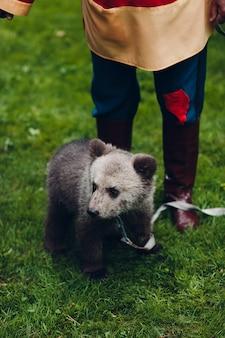 Молодой бурый медвежонок