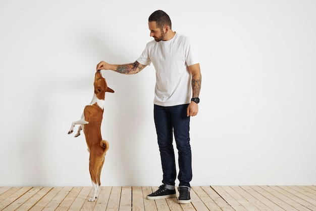 A young brown and white basenji dog is standing very tall on its rear paws as its bearded and tattooed owner motivates it by offering it a treat high up in the air.