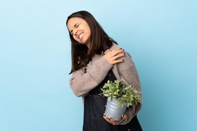 Молодая брюнетка смешанной расы женщина держит растение над синей стеной страдает от боли в плече за усилия