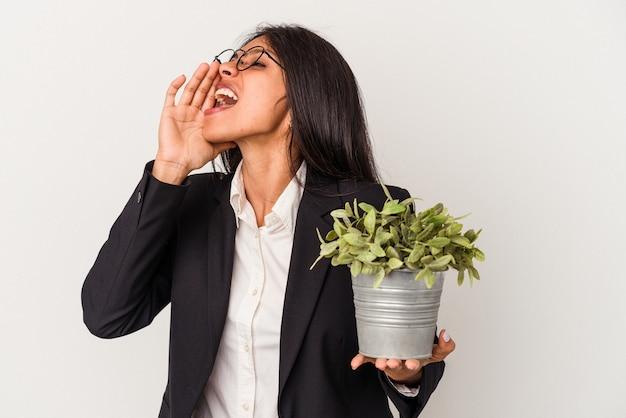 開いた口の近くで叫び、手のひらを保持している白い背景で隔離の植物を保持している若いビジネスラテン女性。