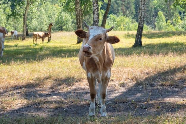 Молодой теленок, корова на фоне деревьев. идея ухода за животными. выборочный фокус.
