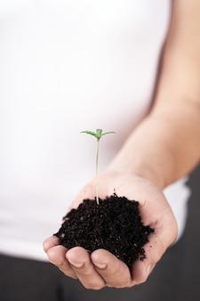 女性の手、医療用マリファナの若い大麻植物。
