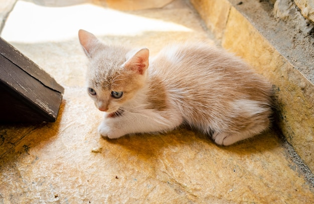 Young cat feeling afraid and alone on a concrete floor