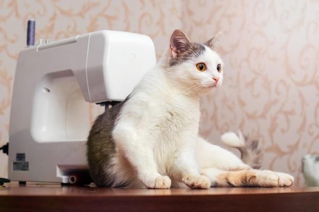 재봉틀 근처 워크샵에서 젊은 고양이