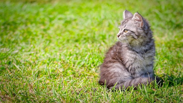 Young cat kitten on green meadow