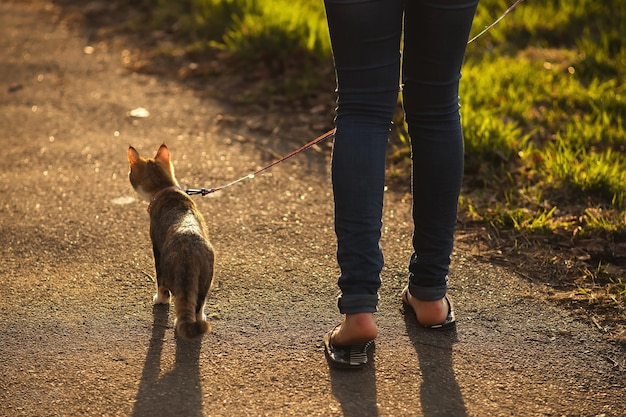 ハーネスに乗った若い猫が飼い主と一緒に春の公園を散歩