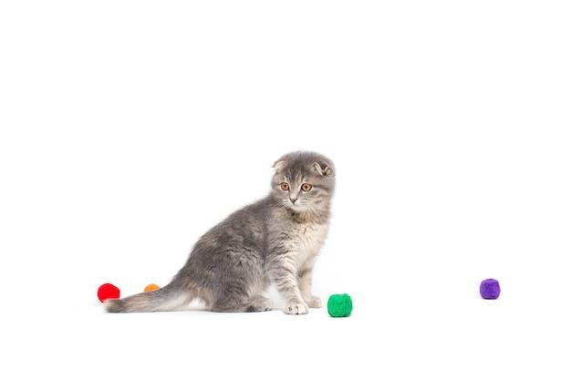 부드러운 공을 가지고 노는 어린 고양이