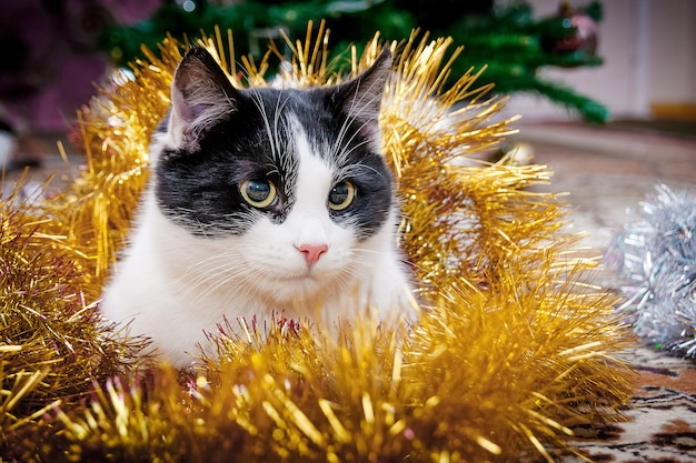 A young cat, shrouded with garlands, under the christmas tree