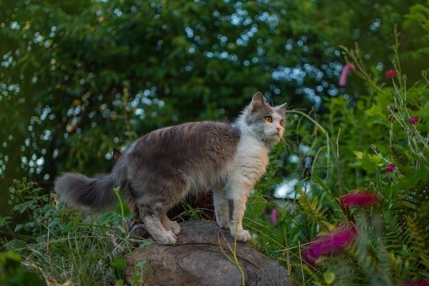 若い猫が歩き、美しい庭を楽しんでいます。汚れた猫が牧草地に立っています。